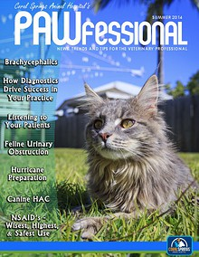 Coral Springs Animal Hospital's Pawfessional