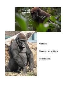 Gorilas: especie en peligro de extinción