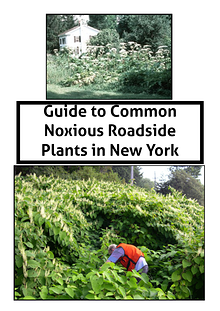 Guide to Common Noxious Roadside Plants in New York