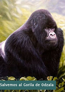 Salvemos al Gorila de Odzala