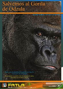 El Gorila de Odzala