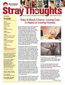 Stray Thoughts 2019 Volume 4