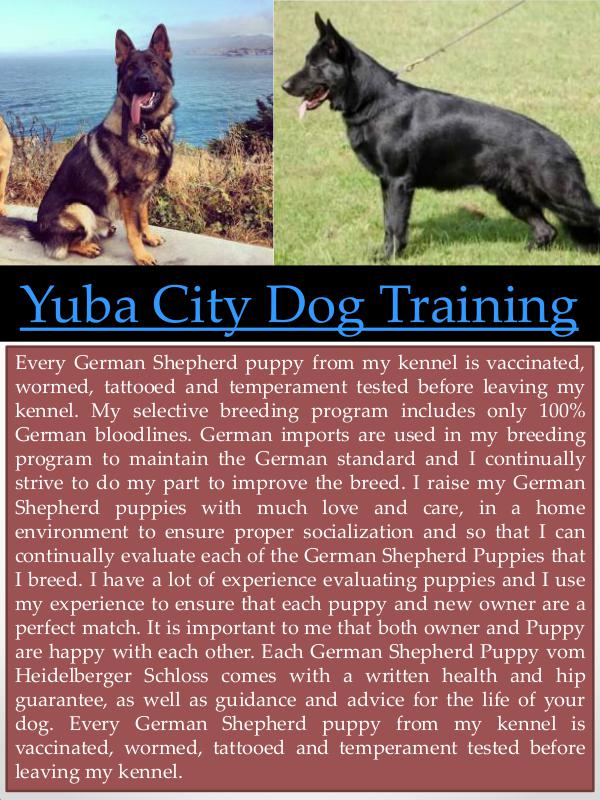 Marysville German Shepherd Breeder Yuba City Dog Training